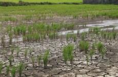 Des mesures pour lutter contre la sécheresse et la salinisation