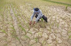 Cambodge : presque la totalité des localités touchées par la sécheresse