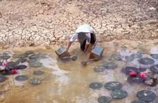 La sécheresse et la salinisation ravagent le delta du Mékong
