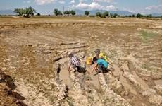 El Nino commence à faiblir, mais la sécheresse perdure au Vietnam