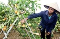 Aide étrangère pour les ethnies minoritaires de Bac Kan