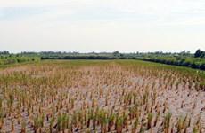 Réunion sur l'adaptation au changement climatique à Soc Trang