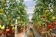 Lâm Dông : attrait de 500 millions de dollars dans l'agriculture high-tech