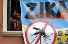 Aucun cas de virus Zika détecté à Ho Chi Minh-Ville