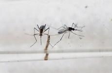 Premier cas de virus Zika à Singapour