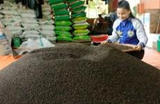 Le poivre, une épice «en or» pour le Vietnam