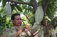 Une société de Dong Nai exporte du cacao en République de Corée et au Japon