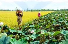 Création du Centre des biotechnologies de la région de Dông Thap Muoi
