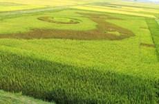 Une carte du Vietnam dans un champ de riz