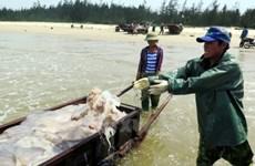 Un gigantesque plan d'aide de 263.000 travailleurs affectés par l'hécatombe de poissons