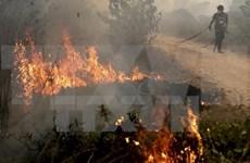 L'Indonésie s'engage à lutter contre les fumées des incendies de forêts