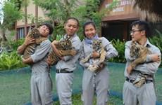 Quatre petits tigres voient le jour sur l'île de Phu Quôc