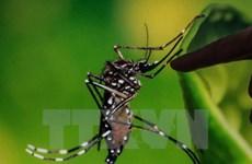 Un Taïwanais infecté par le virus Zika au cours d'un voyage au Vietnam