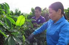 Nouvelle ruralité : quand caféiculture rime avec développement durable
