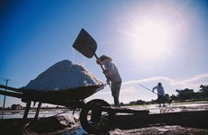 La saliculture à Nam Dinh