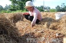 Dans la province de Dông Thap, où champignon rime avec million