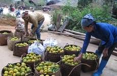 Bac Kan profite des avantages des produits protégés par l'indication géographique