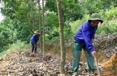 Le Vietnam continue de développer des projets de caoutchouc au Cambodge