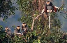 Exposition photographique sur la biodiversité à Son Tra