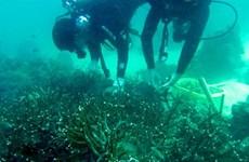 Ils plantent des coraux pour redonner vie aux récifs de Phu Quôc