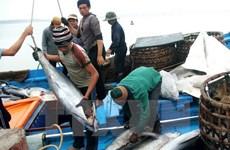 Demande de révision des taxes sur les thons vietnamiens expédiés au Japon