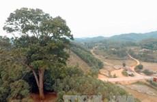 Un nouvel arbre du patrimoine à Bac Giang