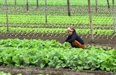 Un groupe néerlandais construira un centre de production de semis de légumes à Ha Nam