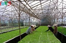 Comment Hà Nam développe l'agriculture high-tech