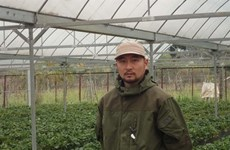 Nahana Shojiro, les fraisiers japonais de la passion à Môc Châu