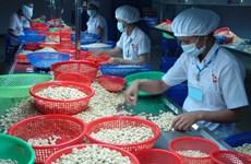 Les exportations de noix de cajou en baisse