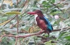 Un projet pour protéger les oiseaux aquatiques rares au parc national Ben En