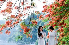 Bientôt Festival des flamboyants rouges à Hai Phong