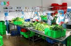 Multiplier les modèles agricoles high-tech