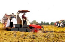 Hau Giang fait appel à l'investissement dans l'agriculture high-tech