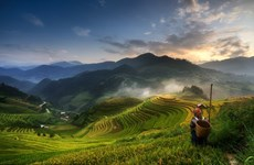 Une photo de Mu Cang Chai primée à l'international
