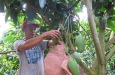 Fruits et légumes : le Vietnam vise 3 milliards de dollars d'exportations en 2017