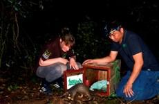 53 pangolins relâchés dans la nature