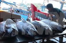 Chine et Vietnam accélèrent le développement durable de la pêche dans le golfe du Bac Bo