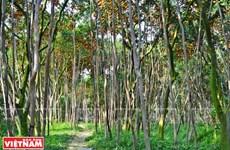 Lai Vung, le «royaume des mandarines»