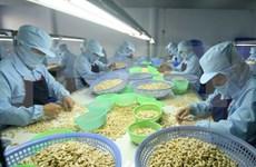 Le Vietnam projette d'exporter 3,3 milliards de dollars de noix de cajou en 2017