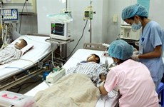 Alerte : importante épidémie d'encéphalite japonaise au Vietnam