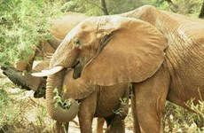 Des efforts conjoints ont été demandés pour protéger les derniers éléphants sauvages au Vietnam