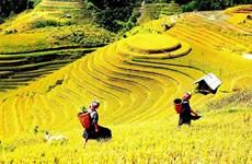 Semaine touristique des rizières en terrasses de Mu Cang Chai