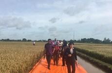 Riziculture : l'APEC s'intéresse au Vietnam