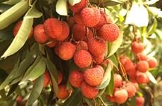Aide australienne dans l'amélioration de la qualité et de la valeur des fruits et légumes