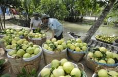 Lancement d'un projet de transformation de fruits et légumes à Gia Lai