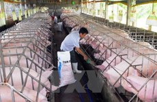 Le groupe français Olmix inaugure une usine d'additifs alimentaires à Binh Duong