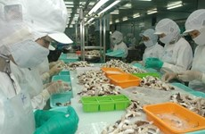 Céphalopodes: bond des exportations vietnamiennes au Japon