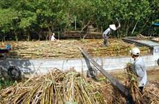 Pour un développement durable de la filière nationale de la canne à sucre