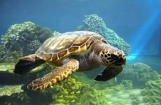 Lancement d'un plan de sensibilisation sur les tortues marines